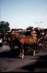 Highlight for Album: Westfriese markt in Schagen jaren zeventig