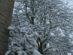 winter-3maart05-15
