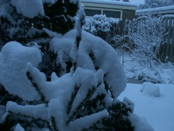 winter-3maart05-5